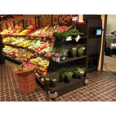 Regale in einem Supermarkt